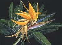 BIRD OF PARADISE - SOLITUDE