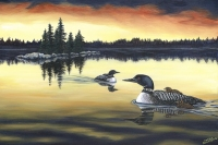 EVENING LOONS