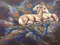 Rocky Mountain Sheep Rest