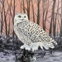 Snowy Owl on Alert