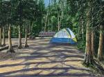Camp Out At Cold Lake